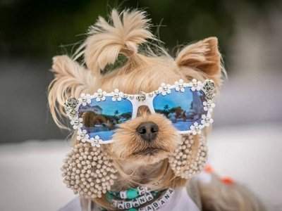 Распродажа одежды для собак в «Зоопассаж»!