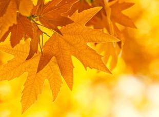 Осенний ценопад на Топ-Шоп