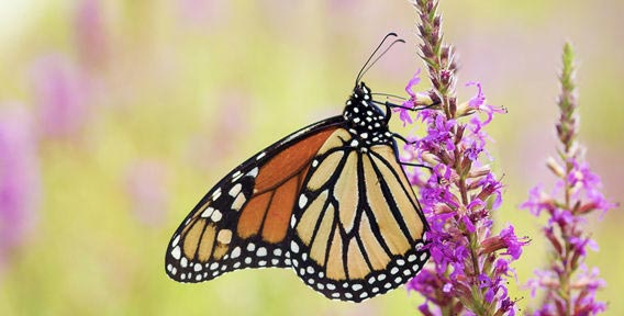 Билет на Ферму бабочек со скидкой 50% от Групон